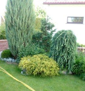Озеленение участка* садовые работы