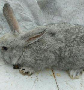 Кролики три за 1000р