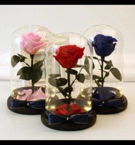 Живая роза