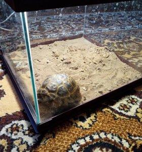 Черепаха среднеазиатская и террариум с подсведкой