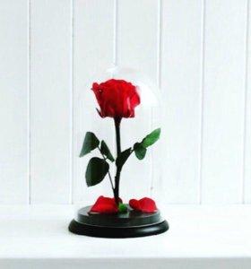 Премиум-Розы в колбе