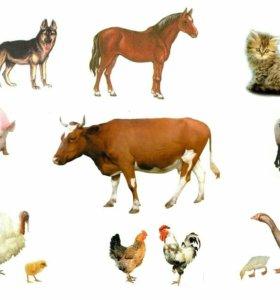 Захоронения домашних животных