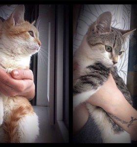 Малыши котята ищут дом