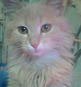 Котик Тиша