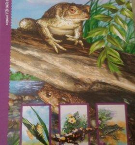 Книга про земноводные животных