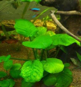 Растения, креветки, улитки для аквариума