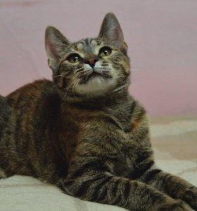 Котенок Маруся ищет дом!