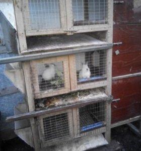 клетка для кроликов