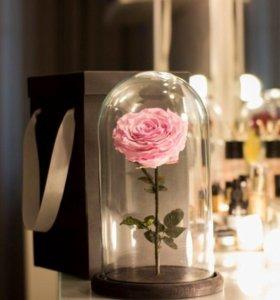 Роза в стеклянной колбе + коробка
