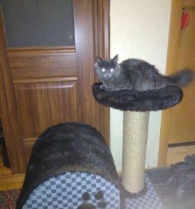 Кошечка с домом