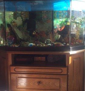 Панорамный аквариум