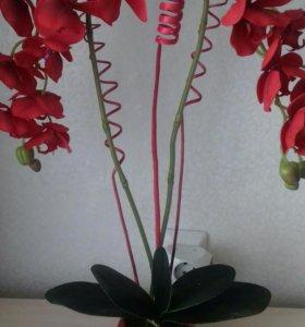 Орхидея -фаленопсис интерьерная композиция