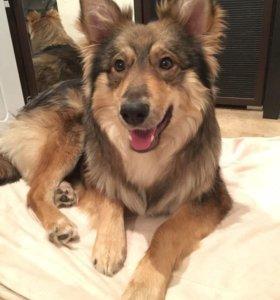 Дружок - солнечный пес в добрые руки