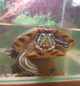 Бесплатно Черепаха и аквариум