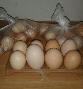 Яйца куринные, домашние. Самовывоз