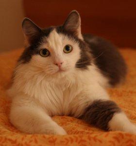Котик Лелик 1,5 года ищет дом