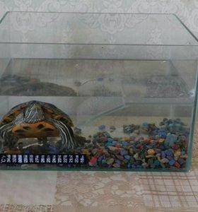 Черепашка с аквариумом!!!