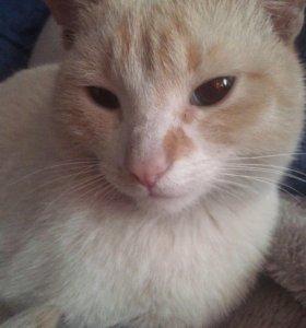 полу Сфинкс отдам в добрые руки кот