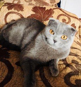 Кошечка 1 год