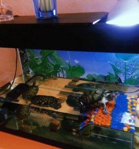 Красноухая и аквариум