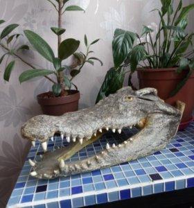 Голова крокодила, натуральная