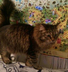 Кошка в частный дом