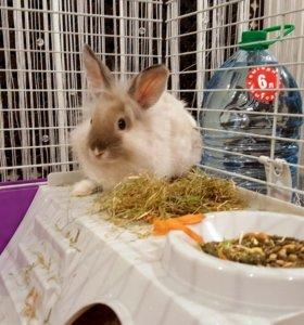 Декоративный кролик + клетка