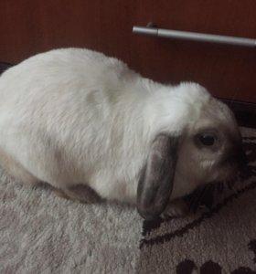 Кролик с клеткой и аксессуарами