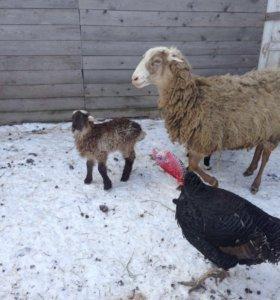 сено в брикетах  15-20 кг, овес, ячмень,дробленка