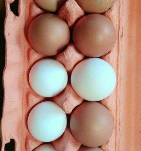 Продаём домашние яйца
