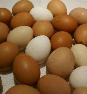 Яйца домашние деревенские куриные