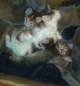 Отдам котят в добрые и заботливые руки!