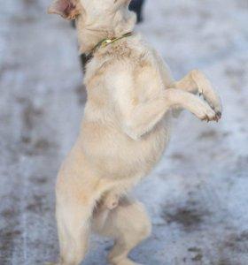 Пёс охранный