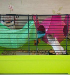 Декоративная крыса с клеткой