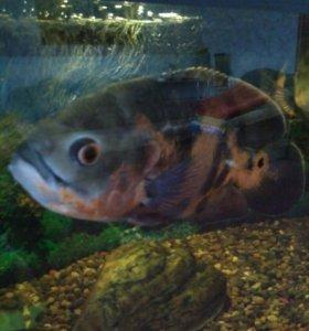 Рыбы и два аквариума