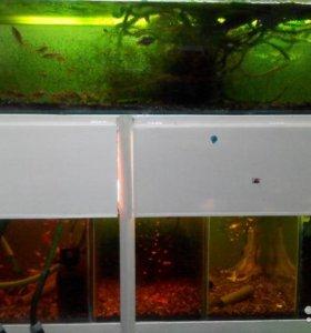 Стеллаж с 5 аквариумами больше 500 литров