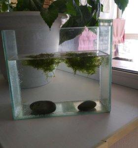 Расстения для аквариума