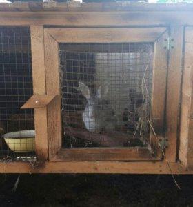 Клетки для кроликов с маточниками и без