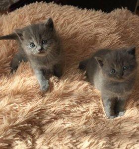 Милые котята 😺