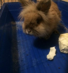 Декоративный кролик + клетка в подарок