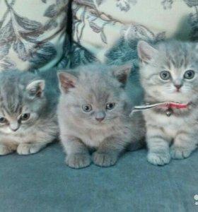 Милые малыши