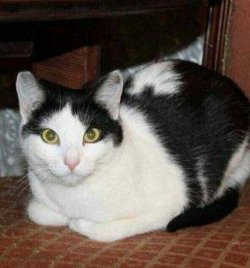 Кошечка Даша ищет дом!
