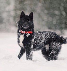 Милая собака Нора в добрые руки