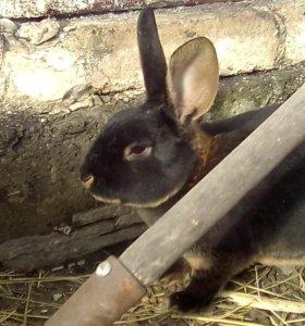 Плюшевые кролики Рекс