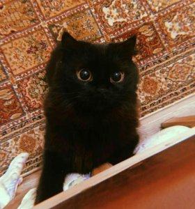 Отдам кошку в связи с переездом