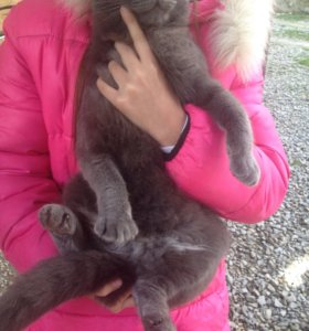 Кошка ласковая