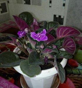 Комнатные цветы в ассортименте