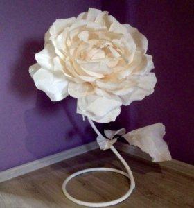 Большая роза, ростовые цветы