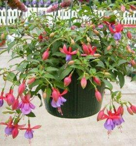 цветы комнатные - отростки