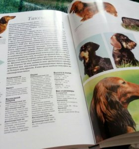 Энциклопедия о породах собак